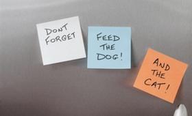 Haustiere allein Zuhause: Checkliste