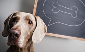 Urlaub mit dem Haustier: Checkliste