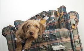 Urlaub mit dem Haustier: Haftschutz & Unterkunft