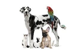 Haustier im Ferienlager