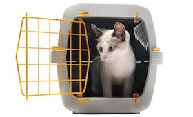 Transport des Haustiers